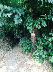 I completely missed this path on the way back, and I still don't know how.